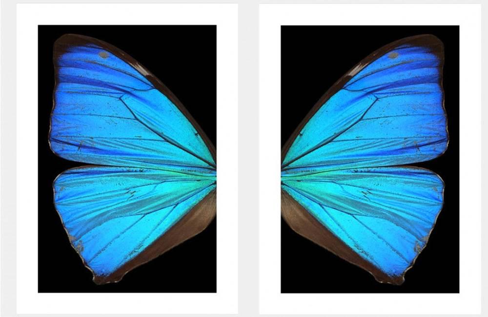 Le ali dell'angelo secondo