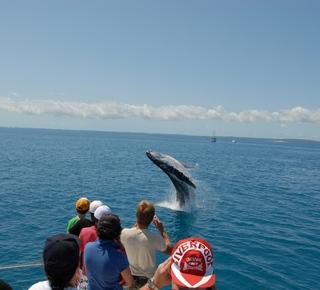 Alla ricerca di delfini e balene Hotel